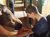 Mazlení s koníkem